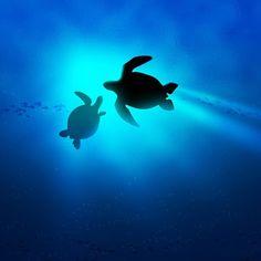Sea Turtles ...