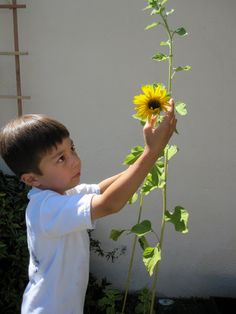 Spring is a great time for kids to explore the flowers in your garden. Identify parts and watch how their progress as they grow!