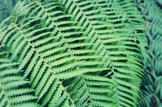 Plant Leaves, Tropical, France, Nantes, Travel, French
