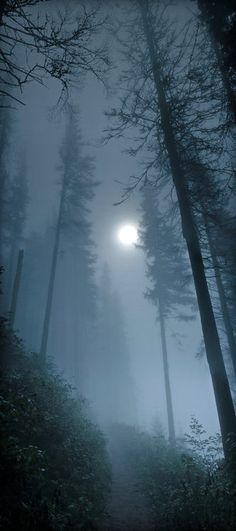 Fog Rolling In. / Moon in the Foggy Forest Nature Photography Beautiful Moon, Beautiful World, Beautiful Places, Beautiful Pictures, All Nature, Amazing Nature, Night Skies, Belle Photo, Mists