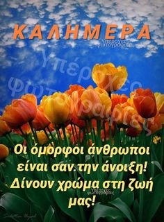 Beautiful Pink Roses, Good Morning Good Night, Greek Quotes, Character Design, Movie Posters, Painting, Vintage Ideas, Wallpapers, Hair