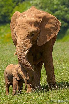 Feliz junto por Patrick Bakkum no Flickr. Elefantes asiáticos