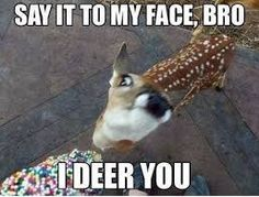 funny animal memes - Google Search
