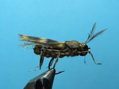 Foam Nation - All the foam pattern      Franken Mouse     Cicada X      Water Dragon     Spread Wing Cicada X      Popping Hopper V...