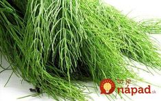 Health Fitness, Herbs, Gardening, Lawn And Garden, Herb, Fitness, Horticulture, Health And Fitness, Medicinal Plants