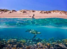 Get to see the beauty of the world, under the seas -- Australia. 2013 Sony World Photography Awards Underwater Wallpaper, Underwater Photos, Underwater Photography, Hd Wallpaper, Underwater Background, Beach Wallpaper, Turtle Beach, Ocean Turtle, Turtle Swimming