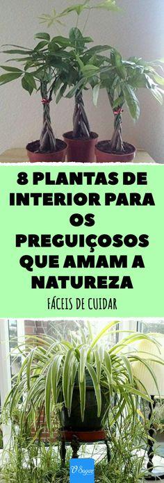 8 plantas de interior para os preguiçosos que amam a natureza#plantes #decoraçaodeinterior #decoraçaonatural #decoraçaoverde #interiores #natureza #plantadeinterior #plantas #verde