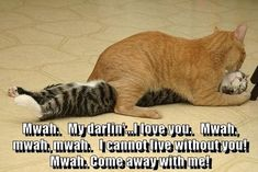 View All - Funny Animal Pictures With Captions - Very Funny Cats - Cute Kitty Cat - Wild Animals - Dogs I Love Cats, Cute Cats, Funny Cats, Funny Animals, Smart Animals, Wild Animals, Crazy Cat Lady, Crazy Cats, Super Cute Animals
