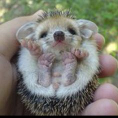 awhhh I want one!