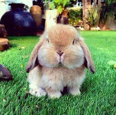 Conejo cacheton!!!