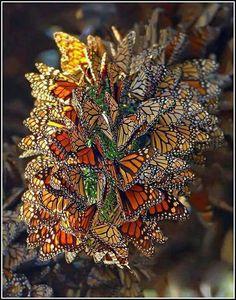 Beautiful Bugs, Beautiful Butterflies, Amazing Nature, Stunningly Beautiful, Absolutely Stunning, Beautiful Creatures, Animals Beautiful, Animals Amazing, Art Papillon