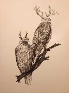 "Antlered Red Tail Hawk  Original Pen drawing in a 11"" X 14"" black, white, or raw pine frame"