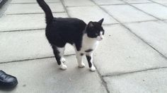 FOUND!This cat was found in Liverpool within the L27 area.Have you spotted this cat or do you have any information?Please get in touch if so.