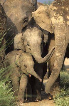 Indian Elephants by Jagdeep Rajput