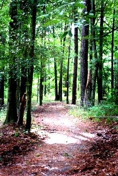 San Felasco Preserve forest trail, Gainesville, Florida.  http://www.GainesvilleFloridaHomes.com