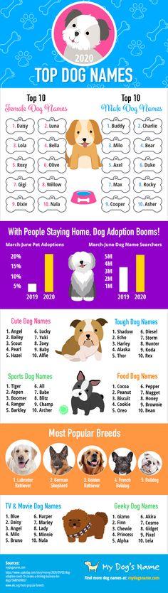 16+ Cute baby pet names in kannada info