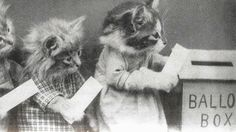 Here Is a Picture of Cats Voting | Mother JonesHarry Whittier Frees, an American photographer credited with photographing the first Lolcats, reportedly took this photo of cats voting as long ago as 1914.