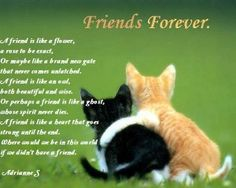 Happy Friendship Day 2014 SMS, Friendship Day Pictures: Hello guys, today we are presenting sms for friendship day and pictures for happy friendship day.