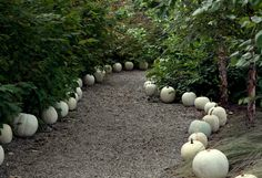 Decorating the Fall Harvest http://www.shopterrain.com/harvest_decor #white #pumpkins #path