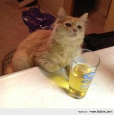 Random Collection of Funny Cats From Animal Planet