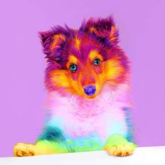 Ramzy Masri is a talented Brooklyn-based graphic designer who uses rainbow colors as a major inspiration for his artwork. Pretty Animals, Colorful Animals, Cute Little Animals, Cute Funny Animals, Baby Animals Pictures, Animals And Pets, Beautiful Cats, Animals Beautiful, Rainbow Dog