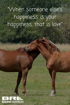 """""""When someone else's happiness is your happiness, that is love"""" #BRLEquine #performancehorse #loveyourhorse"""