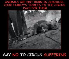 Animals Are Not Born In Shackles: your family's tickets to the circus pays for them. LET THEM GO!