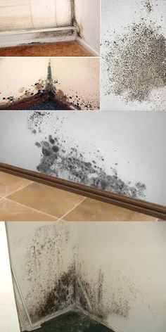 Home hacks cleaning Trendy ideas House Cleaning Tips, Cleaning Hacks, Simple House, Clean House, Home Library Diy, Home Gym Mirrors, Green Paint Colors, At Home Workout Plan, Tea Tree Essential Oil