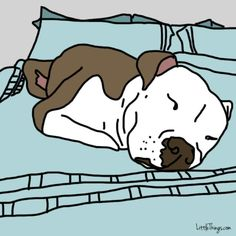 Does Your Dog Ever Do THIS With You? The Answer Reveals Something Amazing! - I'm Just Sayin Hündchen Training, Dog Show, Dog Barking, Dog Care, All Dogs, Dog Sleeping In Bed, Dog Illnesses, Dire, Education Canine