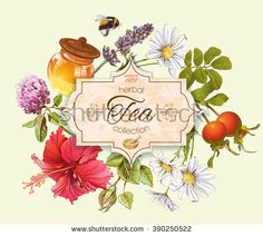 Herbal tea vintage banner with honey, rose hip and hibiscus flower.Design for tea, honey, herbal cosmetics, store, grocery, health care products. Can be used as logo design. Vector illustration.