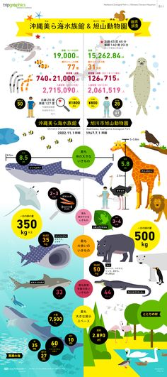 Okinawa Churaumi Aquarium and Asahiyama Zoological Park Web Design, Graph Design, Japan Design, Chart Design, Information Design, Information Graphics, Japan Advertising, Leaflet Design, Typography Poster