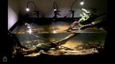 Like the spot lighting to mimic tree-filtered sunlight. Aquarium Setup, Nano Aquarium, Aquarium Design, Planted Aquarium, Tropical Freshwater Fish, Freshwater Aquarium Fish, Turtle Aquarium, Biotope Aquarium, Aquatic Insects