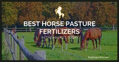 Top 5 Best Horse Pasture Fertilizers In The Market Today If you want to take good care of a horse pasture field, one of the things that you must ensure is to get the best horse pasture fertilizer