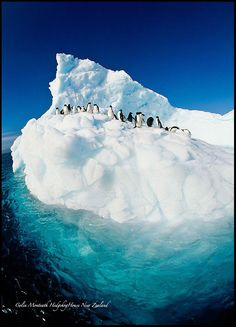 Tip of the iceberg....Antarctica by Colin Monteath on 500px