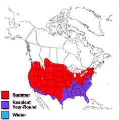 Fire ant infestation map -- American South   Insect Frenzy ...