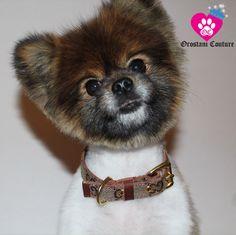 A personal favorite from my Etsy shop https://www.etsy.com/listing/230911266/gg-designer-monogram-luxury-dog-collar