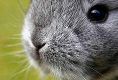 ÍNDIA: IMPORTAÇÃO DE PELES DE RÉPTEIS, MARTAS, RAPOSAS E CHINCHILAS PROIBIDA. A decisão foi tomada recentemente e está a ser aplaudida por associações de defesa de animais em todo o mundo.
