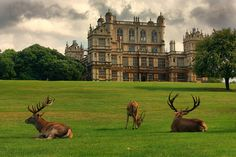 Wayne Manor (Wollaton Hall and Deer Park) | by Andy Watson1, Nottingham, England. The filming location for The Dark Knight Rises