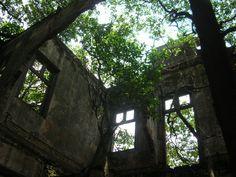 alfeneiros adultos crescendo em ruínas de colégio na Vila Zélia (Zona Leste).
