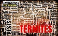 Termite Pest Control at Melbourne.