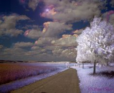 Infrared #InfraredPhotography #Infrared #Photography