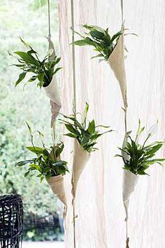 Einblatt in Blumenampeln (Quelle: Pflanzenfreude.de)