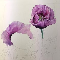 Work in progress. Watercolours on watercolour paper. Opium poppies.