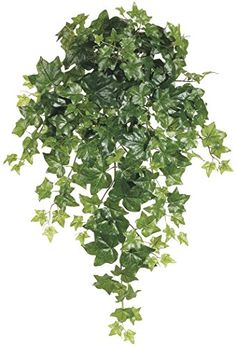 Silk Plants Direct Ivy Hanging Plant Pack of 12 * Be sure to check out this awesome product.