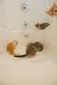 """Where did it go?  If it goes down there then no more bath???"""" ""Hey, lady with the red light, where does it go???"""