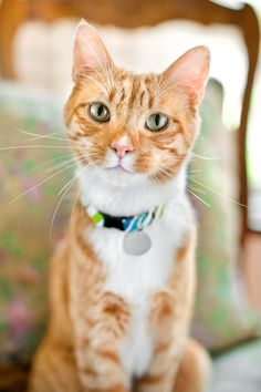 Grace Chon | Dogs, Cats & More Nine Lives, Orange Tabby Cats, Amp, Dogs, Life, Animals, Animales, Animaux, Pet Dogs