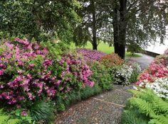 Flower walkway How Beautiful, Beautiful Gardens, Container Gardening, Gardening Tips, Garden Planning, Hydroponics, The Great Outdoors, Walkway Garden, Succulents