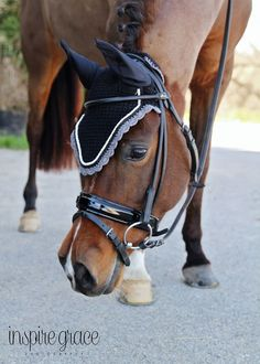 Cuteness overload! Obsessed with our Monaco rolled leather bridle on this mare! 20x60.com
