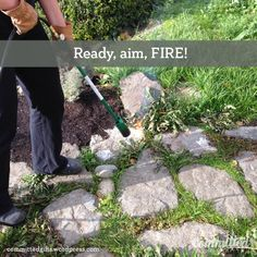Flame weeding: an organic way to kill weeds. Also called weed torching. Use a torch and your propane tank to wilt weeds. They wither and die, along with any seeds or roots.
