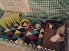 Guinea pig cage ideas: geometric